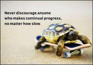 slow steady race turtle